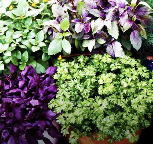 Herbs-CTA